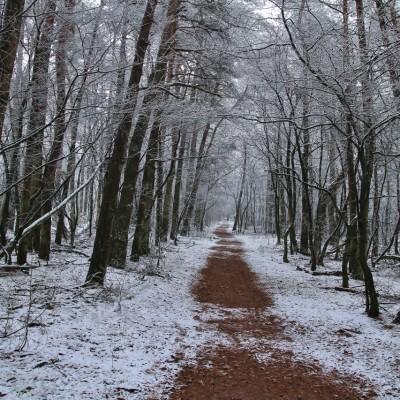 Sneeuw Kootwijk