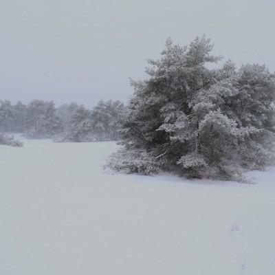 Sneeuw Kootwijkerzand
